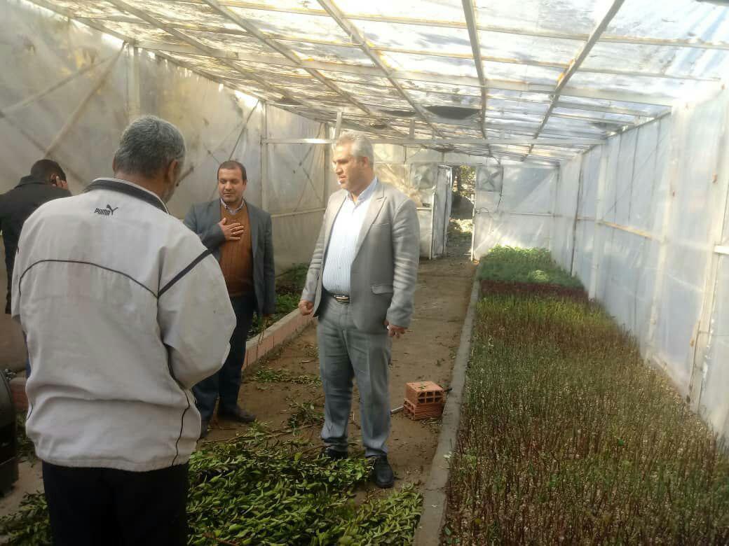 بازدید شهردار و رئیس شورای شهر از گلخانه واحد فضای سبز